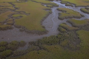 An aerial view of a salt marsh at Guana Tolomato Matanzas National Estuarine Research Reserve