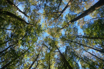 Highlands Hammock State Park - Looking up through the trees