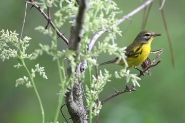 Honeymoon Island State Park - Bird on a limb