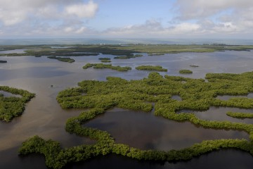 An aerial photo of coastal mangroves at Rookery Bay National Estuarine Research Reserve