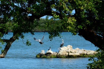 Sebastian Inlet State Park - birds on a rock just inside the inlet