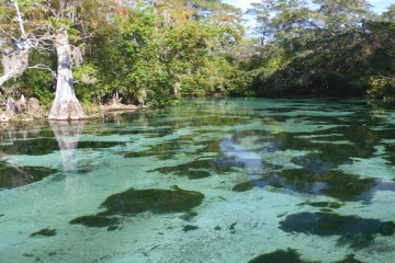 Photograph of Weeki Wachee River downstream from Weeki Wachee Springs State Park