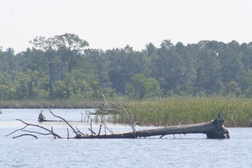 Yellow River Marsh Aquatic Preserve - DEP Staff - Beth Fugate - Downed t...