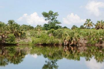Algal Bloom Monitoring and Response
