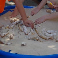 Fossil Dig at the 2015 FGS Open House