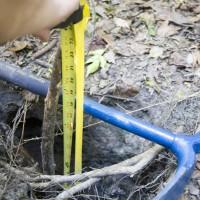 Florida Geological Survey - Subsidence Measurement 2014