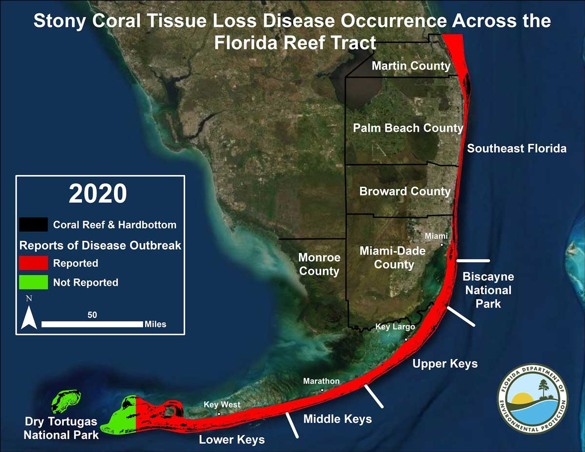 Stony Coral Tissue Loss Disease Occurrence Across the Florida Reef Tract as of January 2020