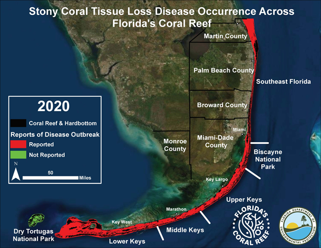 Progression of Stony Coral Tissue Loss Disease along Florida's Coral Reef as of 9-16-20