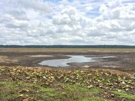 Remaining pools of water, just south of Porter Hole Sink on Lake Jackson June 7, 2021