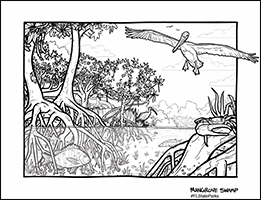 Kid Zone - coloring - Mangrove Swamp
