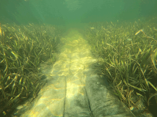 Sediment tubes are used to restore propeller scars in St. Joseph Bay Aquatic Preserve