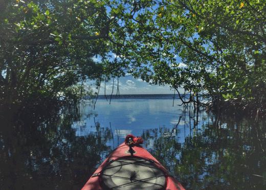 Kayaking through mangroves within Biscayne Bay Aquatic Preserves