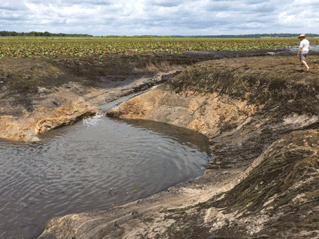 Rapidly draining water in Porter Hole Sink becomes apparent in Lake Jackson during the morning of June 6, 2021