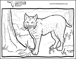 Kid Zone - coloring bobcat