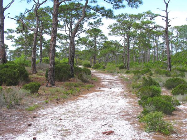 hiking-trail-on-St.-George-Island-State-Park,-photo-by-Doug-Alderson-lr