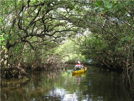 Mangrove tunnel in Tampa bay Aquatic Preserves