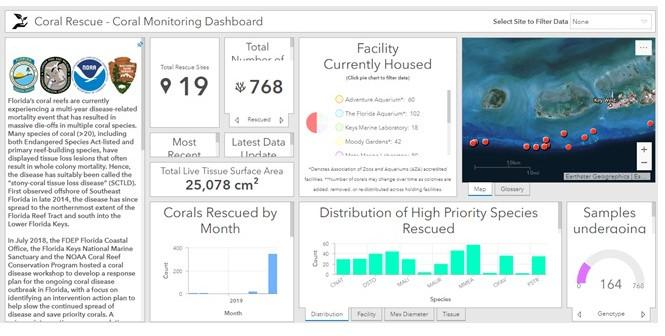 "screenshot_coral_monitoring_dashboard – created by DEP employee; ""Screenshot of a web-based tool summarizing the coral disease response"""