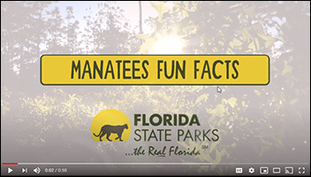 kid zone video manatee fun facts