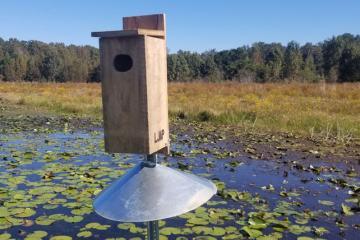 Wood duck nesting box with predator guard installed on Lake Jackson Aquatic Preserve